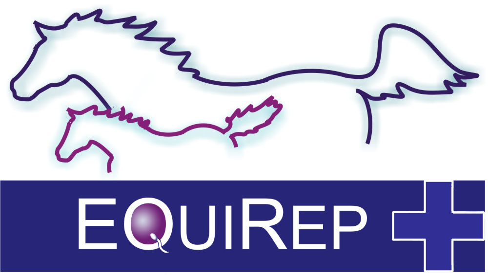 Equirep