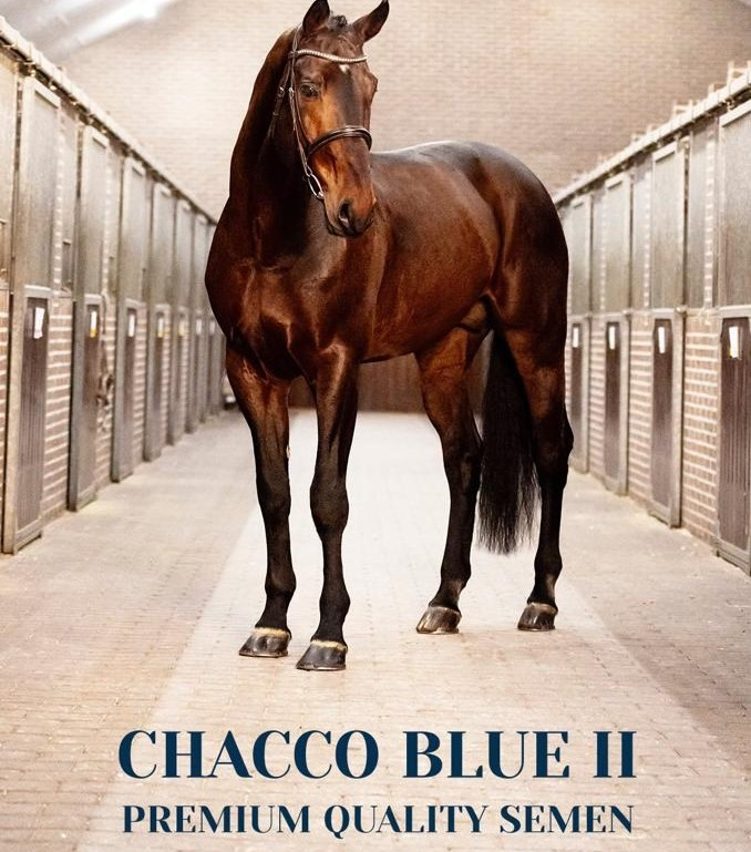 Chacco Blue II